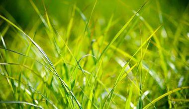 Harmonogram sečí travnatých ploch veřejné zeleně města Nový Jičín